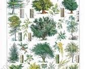 antique french illustration botanical  forest tree digital download
