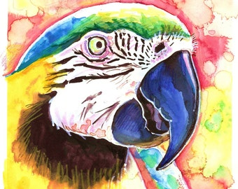 Macaw Parrot --Artist Signed Watercolor Print