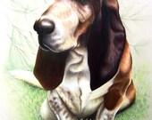 Custom Basset Hound Colored Pencil Pet Portrait Painting by Jody Ball Art