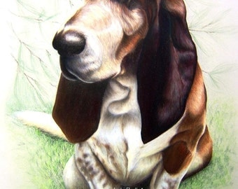 Custom Basset Hound Colored Pencil Pet Portrait Painting by Jody Ball Art