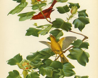 Scarlet Tanager Print by Menaboni Book Plate SALE Buy 3, get 1 FREE or Buy 5, get 2 FREE