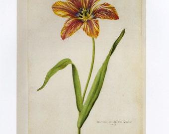 SALE Vintage Book Plate of Tulips, Buy 3, get 1 Free or Buy 5, get 2 FREE
