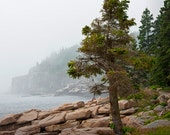 Misty Shoreline and Pine Trees on Mount Desert Island in Maine's Acadia National Park No.179 - A Fine Art Landscape Photograph