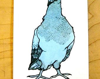 Blue Pigeon- Mini Archival Print