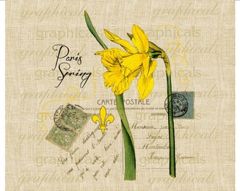Daffodil instant clip art French ephemera Carte Postale digital download image for transfer to fabric paper burlap pillows totes No. 571