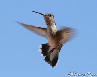 Hummingbird Picture, wildlife photography, nature photo, bird photography, flying bird wall art, 5x7 8x10 11x14 print