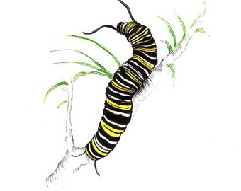 "Monarch Caterpillar Print:  Digital print of an original drawing available 5x7"" or 8x10"""