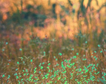 """Fall Photography -- grass infront of autumn trees fall decor 11x14 12x18 16x20 print nature photography fall foliage green orange - """"Touch"""""""