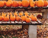 Foliage and Pumpkins 5x7, 8x10, or 8.5 x11 - Fall Decor - Halloween - Autumn Photography - Nature - Rustic Home