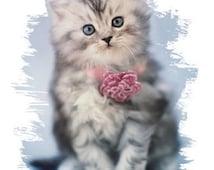Blue Eyed Kitten   T-SHIRT Sweatshirt or Fabric Block  274g