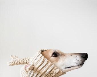 Greyhound Photo, Pet Photography, Wall Art, Nursery Decor, Greyhound Gift, Greyhound Art, Pet Photography, Dog Art, Kids Room Art