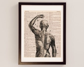Superficial Muscles Dictionary Art Print - Anatomy Art - Print on Vintage Dictionary Paper - Human Body, Medical School Gift, Diagram