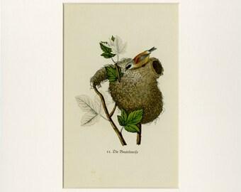 1920 Matted Antique Bird Print Nest Print Original German Chromolithograph Green Bird Nest Egg Tree Nature Ornithology Spring Decor Gift