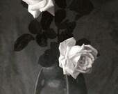 """Vintage photo Print White Roses in Ceramic Vase 24""""X36"""""""