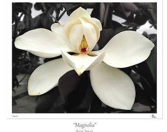 flower photography, magnolia photograph, flower photo, black and white, botanical wall art, southern magnolia