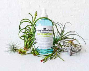 Air Munchiez - Fertilizer for Air Plants - Small or Large Bottle - Care Instructions + FREE GIFT Air PLANT - Fresh Spring Plant Formula!