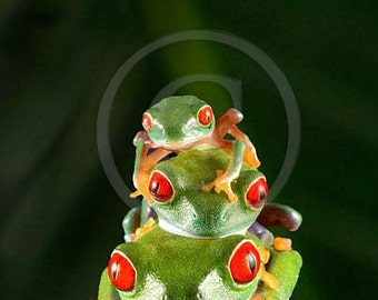 Frog Wall Art - Stack of Frogs - Tree Frog Picture - Animal Portrait - Frog Art