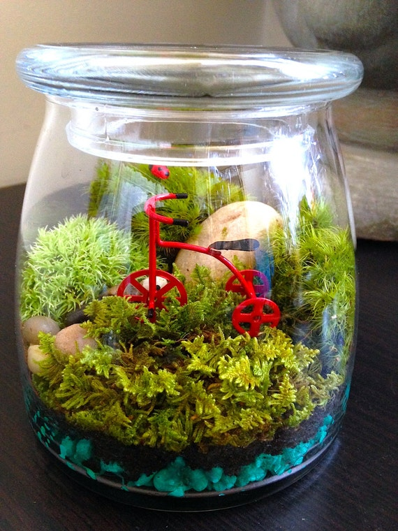 items similar to moss terrarium diy kit or assembled miniature garden w tricycle and ladybug. Black Bedroom Furniture Sets. Home Design Ideas