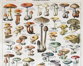 Antique French Dictionary Page - Mushrooms, Champignons - 1923 Original Engraved Lithograph Print - Vintage French Country Decor