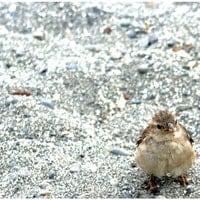 thezensparrow
