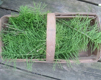 HORSETAIL HERB naturally DRiED  Bunches