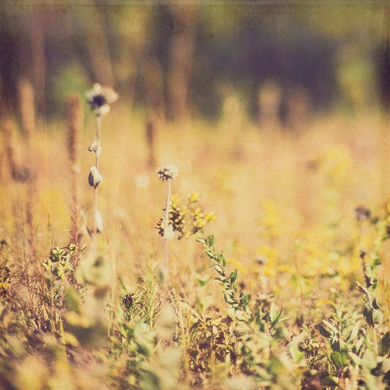 Autumn Yellow Field Kansas Landscape Fine Art Photos Gallery32etsy