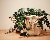 Handmade Ceramic Cow Skull Planter. Altered from vintage molds and perfect for plants or succulents.