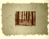 Forest Shadows zinc plate photo etching on handmade paper