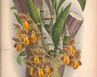 vintage orchid art print, shabby chic home decor, digital image no. 1308