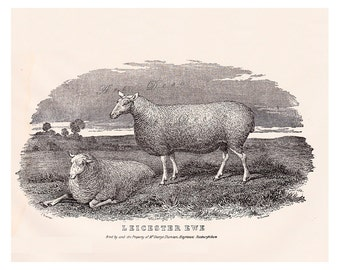 vintage sheep print, a Leicester Ewe, vintage printable digital download art, no. 723