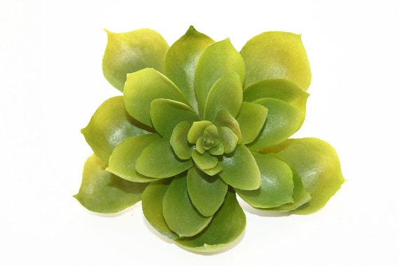 fake succulents artificial succulent in green fake chicks and hens faux succulents artificial succulents item from on