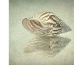 Sea Shell Print, Nautical Still Life,  Sea Shell Photo, Sepia Photography, Shabby Chic Wall Decor