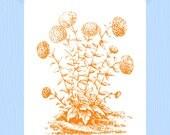 Victorian Flower Printable Orange Chrysanthemum Flower Print 5 x 7 Botanic Print Mum Print Flower Garden Print Orange Mums