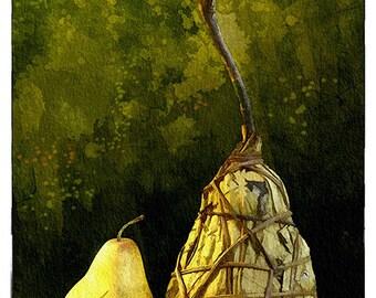 A Pair of Pears (Watercolor Print - 19x13 - Pears - Fruit - Still Life - Hand Made Pear - Fine Art print - Wall Art)