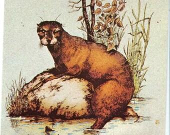 Otter postcard - Becky the Otter, Becky Falls Dartmoor  vintage postcard