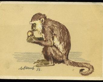 Monkey postcard, Russian monkey  with nut post card,  artist A.M. Laptev Vintage animal postcard, monkey illustration