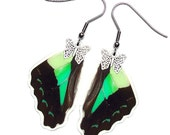 Real Butterfly Wing Earrings (Sarpedon Hindwing - E067)