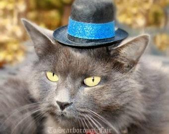 Cat or Dog Hat - Hanukkah Pet Hat - Cat Photo Prop