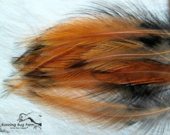 """Hackle Feathers Natural Bird Feathers Loose Feather Real Feather Golden Laced Cochin Rooster Feather Real Bird Feathers 20 @ 3 - 3.5"""" / 7339"""