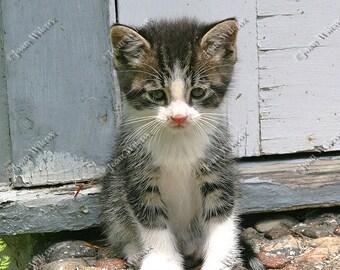 Sad Lonesome Gershwin the Kitty Cat Kitten Original Fine Art Photography Photo Print