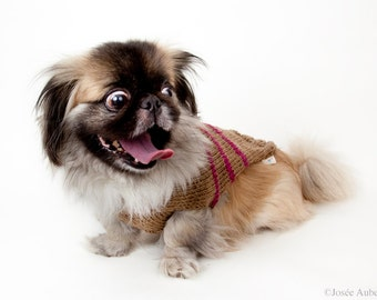 Wool light brown and raspberry medium sweater // Chandail de laine pour chien médium caramel et framboise