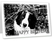 Border Collie dog Happy Birthday card,  cute printable dog greeting card, black and white dog, border collie card, dog lover birthday