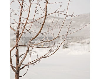 winter nature photography / frost, tree, snow, cold, frosty, white, winter / frosty morning / 8x10 fine art photo
