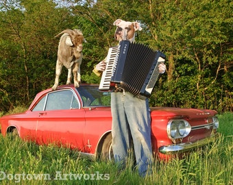 Billy Goat Polka, large original photograph of American bulldog wearing clothes and playing accordion for his pet goat