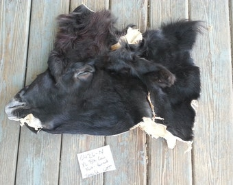 Black Cow Face - Taxidermy Quality - Wet Tanned Lot No. 0426-N