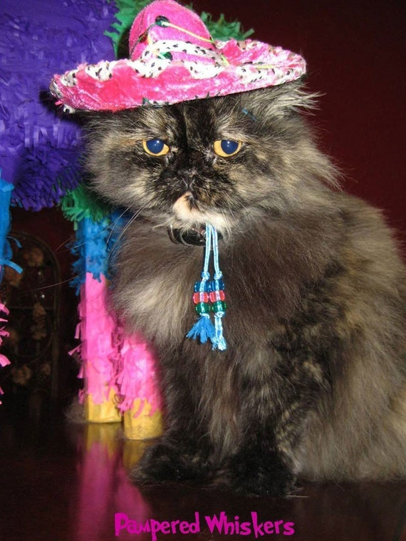 Sombrero for cat or dog - Customizeable Fiesta Fuchsia