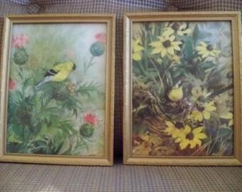set of bird prints in frames
