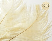 "10 pcs - IVORY - 10-12"" inch - Ostrich Feather Plumes - Dyed Drabs Feathers"