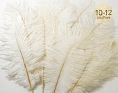 "10 pcs - OFF WHITE - 10-12"" inch - Ostrich Feather Plumes - Dyed Drabs Feathers"
