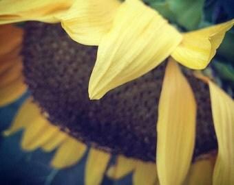 sunflower...cardiff by the sea, ca. - digital print